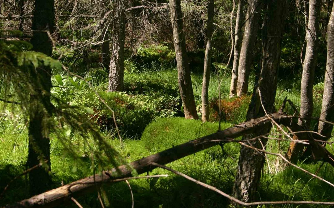 Široké práva pri ochrane životného prostredia