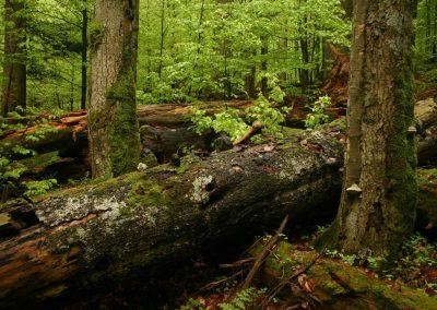 Programy starostlivosti o lesy